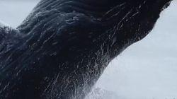 카약을 타고 있는데 거대한 혹등고래가 눈앞에서