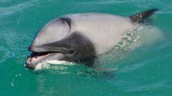 사람처럼 '입으로' 숨을 쉬는 돌고래가 최초로 발견되다(사진,