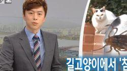 MBC의 '길고양이가 살인진드기를 옮긴다'는 보도에 대한