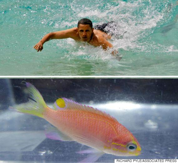 오바마란 이름의 물고기는 날래고