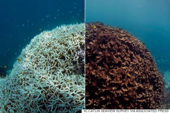생물 다양성을 가장 크게 위협하는 건 기후변화가