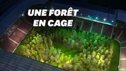 Cet artiste a créé une forêt de 300 arbres... dans un stade de