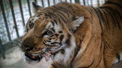 '세계 최악의 동물원'이 드디어 문을