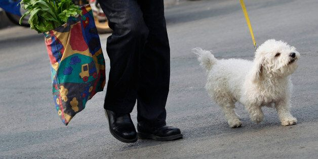 A resident carrying vegetables, leaves a market with her pet dog, in central Beijing, April 9, 2012....