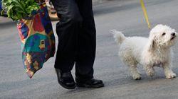 애완동물과 함께 출근할 수 있는 직장이 늘어나고