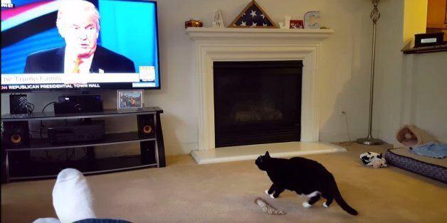 고양이도 도널드 트럼프를 끔찍하게