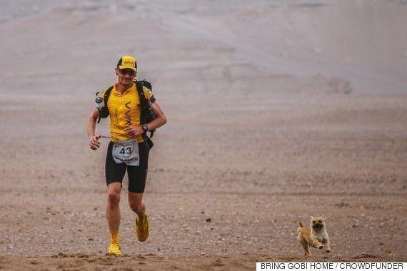 고비 사막 마라톤을 함께 달린 개가 입양을 앞두고