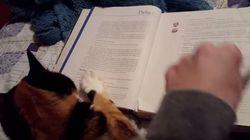 고양이와 함께 책을 읽는 건 정말