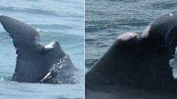 돌고래 근처에서 제트 스키 타면 안 되는 이유를 보여주는 한장의