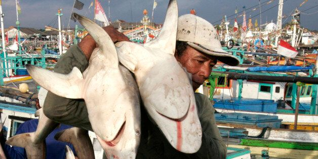 A worker unloads sharks from wooden boats in a fish port in Banyuwangi in Indonesia's East Java province...