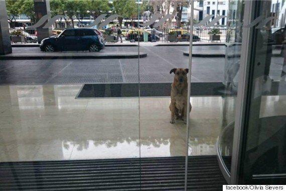 한 사람을 반년 넘게 문 앞에서 기다린 개가 맞은 행복한 결말(사진,