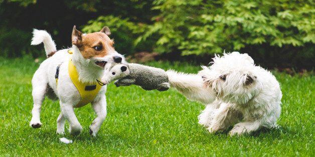 우리 집 강아지들이 서로