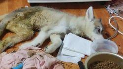 빈 집에서 아사 직전의 강아지를 구조했지만 주인을 처벌할 규정은
