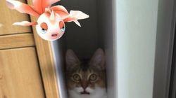 일본에서 반려동물이 포켓몬을 보는 기이한 현상이