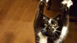 이 고양이가 왜 계속 '만세'를 하는 지, 정말 미스터리다