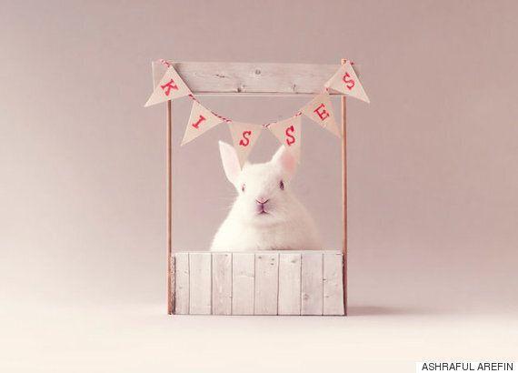 갓 태어난 토끼의 출생사진은 어마무시하게