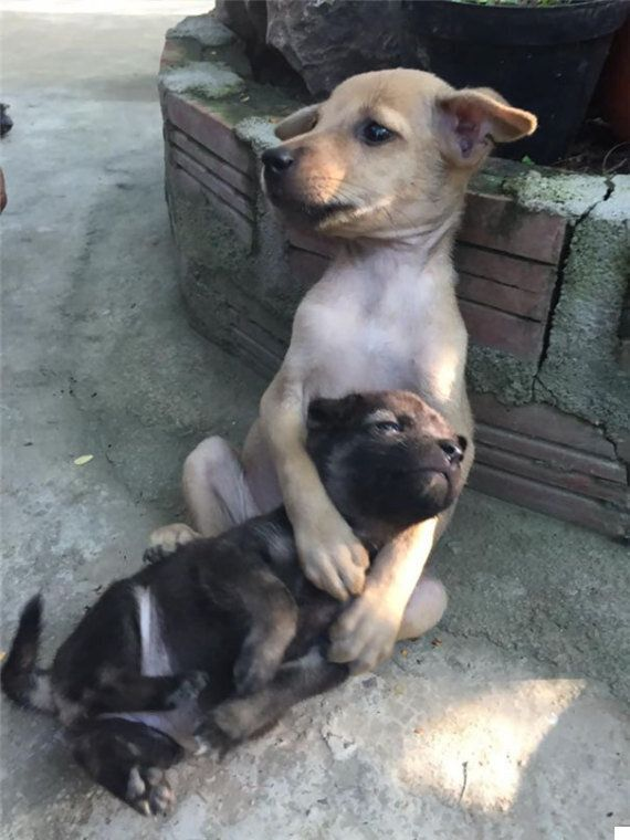 함께 거리를 떠돌던 강아지 두 마리가 서로를