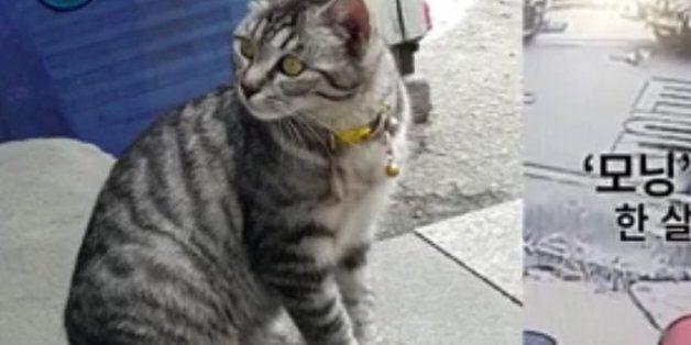고양이를 발로 차 3마리를 사산시킨 범인을