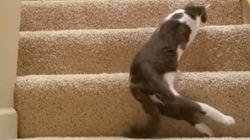 하반신이 마비된 고양이의 일상을 짧은 영상에 담다