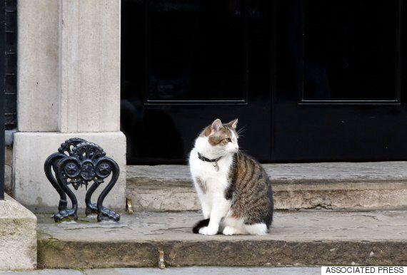 영국 총리관저의 '수렵보좌관' 고양이 래리는 캐머런 사임 이후에도 계속