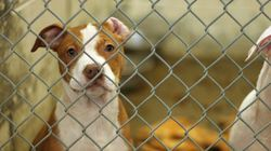 정부의 '반려동물 신산업' 구상은 정말