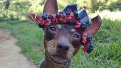 이 강아지는 과일로 오트 쿠튀르 패션을