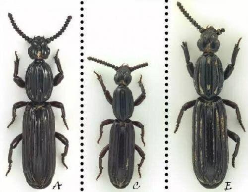 새로 발견한 곤충에 '시진핑'의 이름을 붙인 중국의 생물학자가