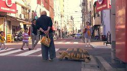 일본에는 거북이와 산책하는 남자가