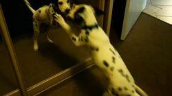 난생 처음 거울을 본 강아지들의 행동은 너무 귀엽다