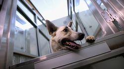 '포켓몬 고'를 한다면 외로운 개들을 웃게 할 수