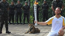 올림픽에서 이뤄진 동물들의