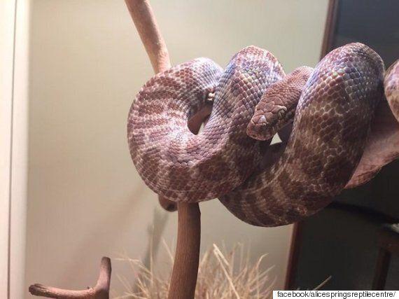 뱀은 자신의 허물 속에서 3시간 동안 길을