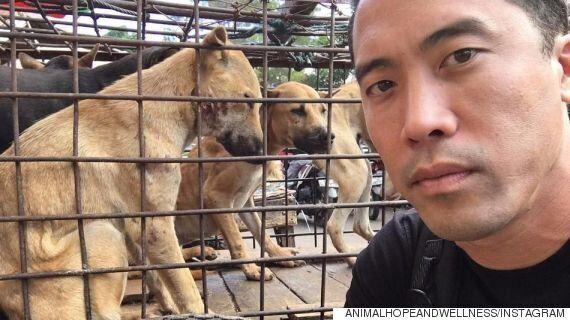 이 남자는 중국 개고기 축제에서 1천여마리의 개를