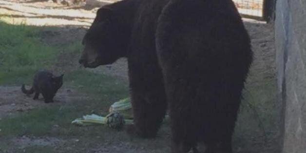 240kg짜리 곰과 친구가 된 길