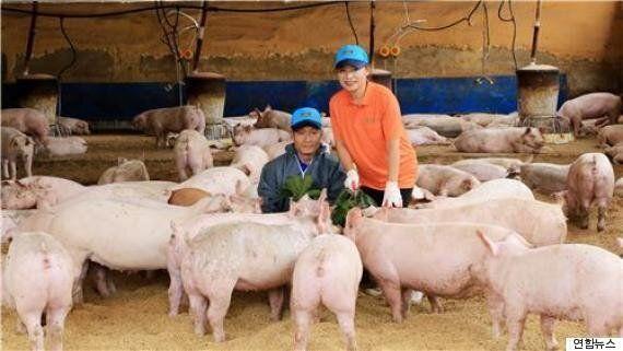 '행복한 돼지의 고기', 국내 최초 동물복지인증 돈육