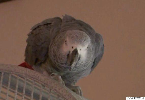 이 앵무새는 살인사건의 목격자로 법정에 설지도