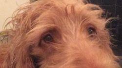 이 강아지는 '브렉시트'만 들으면 격한 반응을