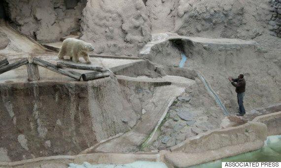 세상에서 가장 슬픈 북극곰이 아르헨티나에서
