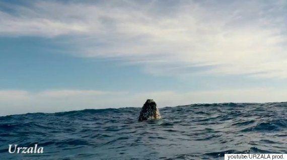 고래의 수면 자세는 매우