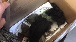 '죽은 고양이'의 사체가 동물보호소 직원들을 웃게