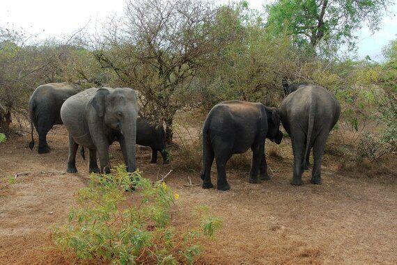 배수구에 빠진 아기코끼리의 운명 | 살 곳이 없어지는 스리랑카