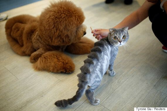 반려동물의 털을 정말 독특하게 깎는 미용실