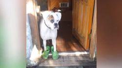 크록스를 신은 개와 산책을 나서다