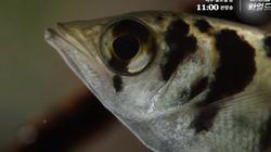 우리 집 물고기가 내 얼굴을 알아볼지도 모른다는 실험