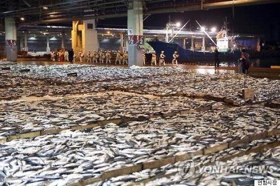수산 시장에서 몸값이 가장 비싼 생선은