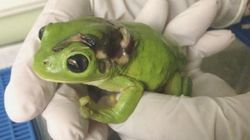 잔디깎이에 다친 개구리를 살리고 싶었던