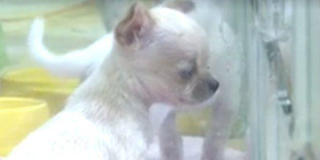 동물단체들이 이마트에 '동물판매중단'을