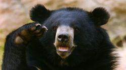 일본에서 '식인곰'의 습격으로 4명이