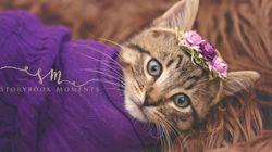 새로 입양한 고양이의 '출생사진'을