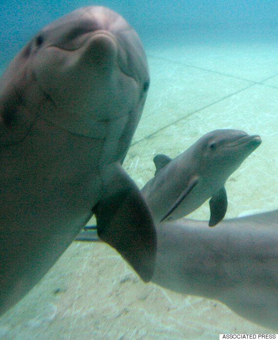 미국 볼티모어 수족관이 돌고래 8마리를 바다로